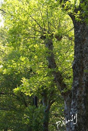 秋楡(あきにれ)の樹・・