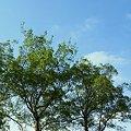 写真: 青空の日・・