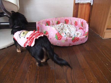 可愛いイチゴのベッド♪