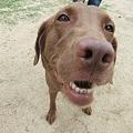 Photos: 可愛い可愛いいずみちゃんはオンリーわんな犬