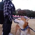 Photos: 大阪城2