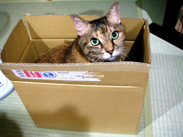 箱の中からこんにちは