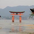 Photos: 110516-50厳島神社と大鳥居