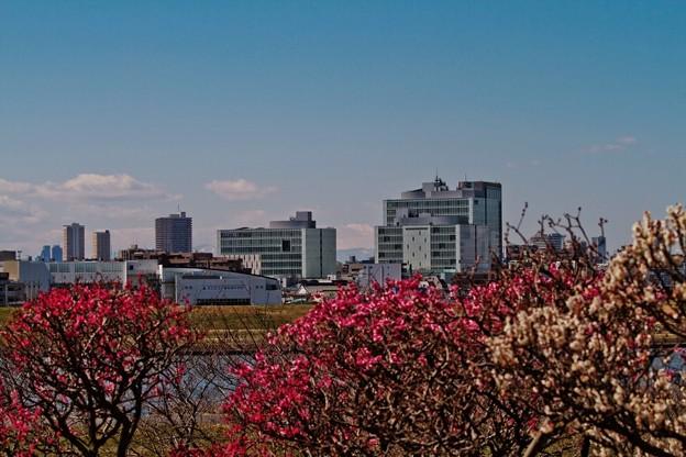 Photos: ちらりと、富士山
