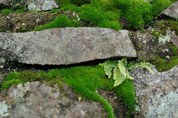 苔むす石垣(1)
