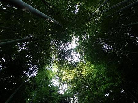 明月院 竹