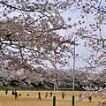 Photos: 栃木県総合運動公園