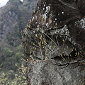IMG_6338妙義山 さくらの里と石門のみち