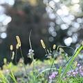 雑草キラキラ