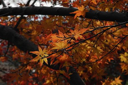 竜田川公園の紅葉-2