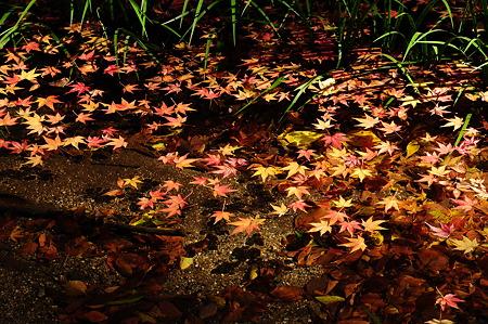 下鴨神社の紅葉(D90)-3