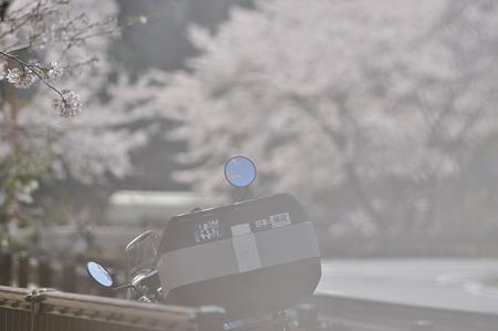 下北山村で桜ツーリング・2