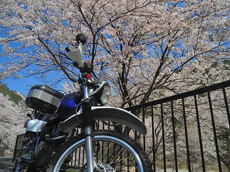 下北山村で桜ツーリング・6