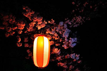 自力ライトアップで桜撮影・7
