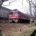 Photos: EF81-116号機・牽引貨物列車