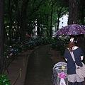 写真: 園内