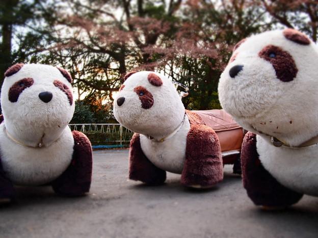哀愁の乗り物パンダ