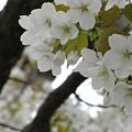 Photos: 花暮れ