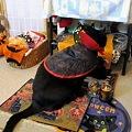 Photos: Ekkun_looking4Something-Halloween2011-2