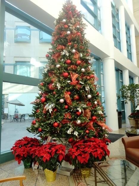 ChristmasTree-Dec2011-2