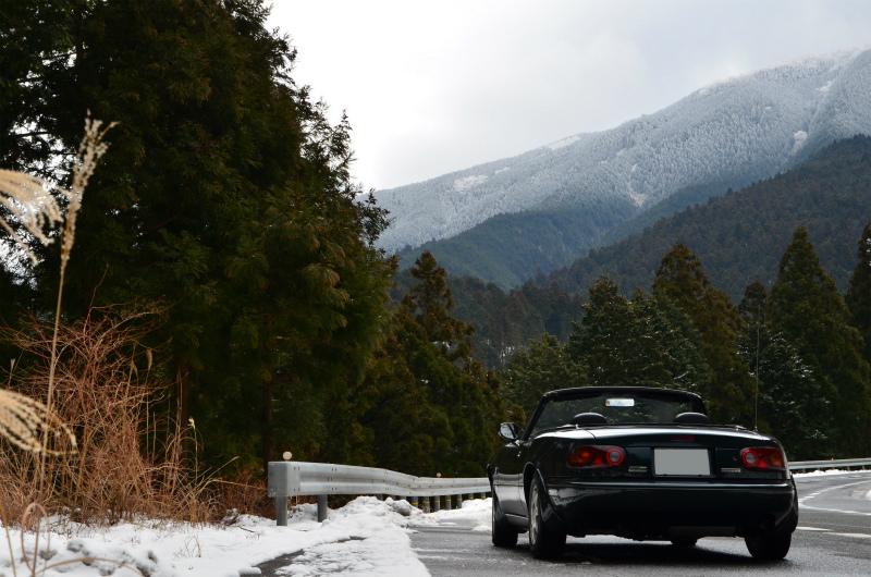 山の上の方では、木々が綺麗に雪化粧