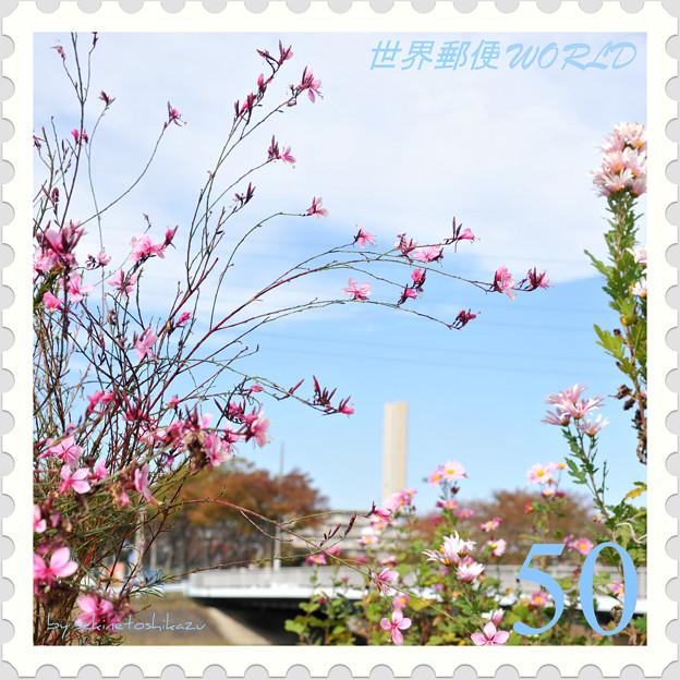 <山桃草*三か月咲いてます!>