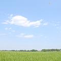 <麦畑*ライトプレーン・悠々(1)>