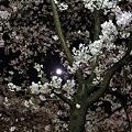 月見桜見!!