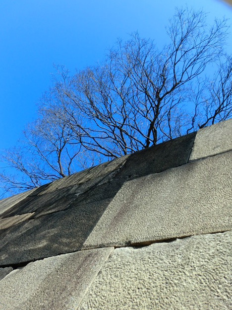 Photos: 石の上にも○○○年。。。?